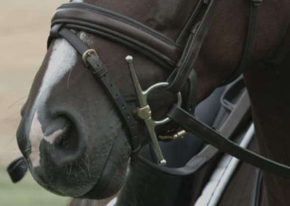 Sprenger Full Cheek bit attached horse